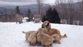 puppies gif cuddle gifs find on giphy