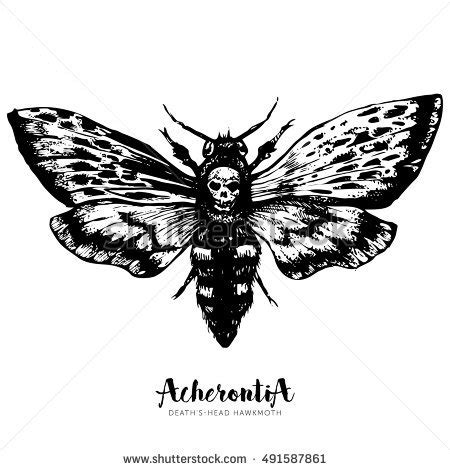 death head moth drawing www pixshark com images