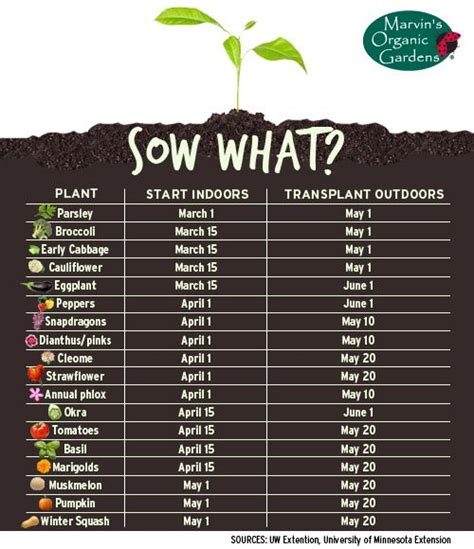 garden chart chart of when to start growing veggie fruit plants