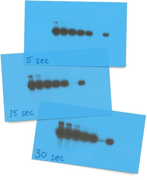 western blot cassette quantitative western blots principles and procedures