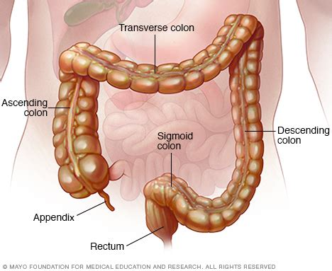 rectal bleeding after c section colon and rectum mayo clinic