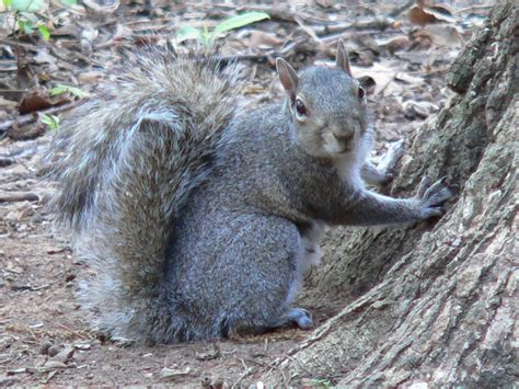 Backyard Squirrel backyard squirrels