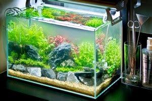 Lu Led Kecil Untuk Aquascape ide kreasi membuat mini aquascape atagaleri net