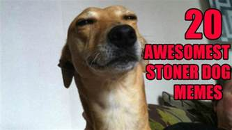 Stoner Dog Meme - stoner dogs 20 hilarious pics of the newest meme based