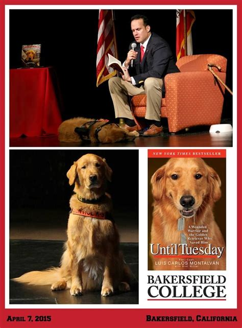 golden retriever bakersfield the 25 best bakersfield college ideas on graduated from going