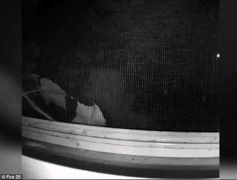 bedroom peeping peeping tom caught on film outside boston woman s bedroom