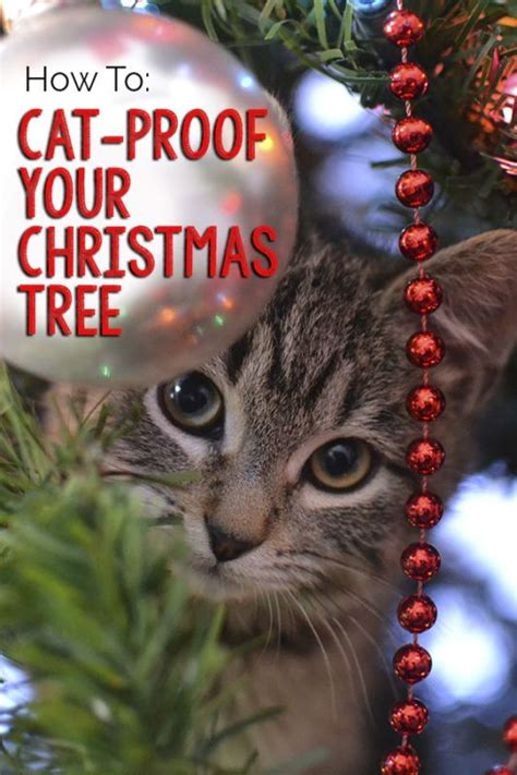 how to cat proof your christmas tree trees cats and