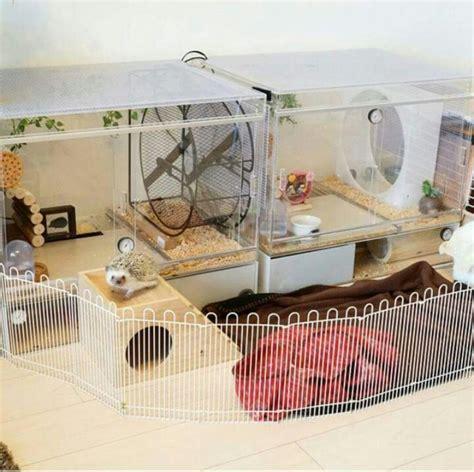 Rabbit Hutch Prices Best 20 Hedgehog Cage Ideas On Pinterest Hedgehog