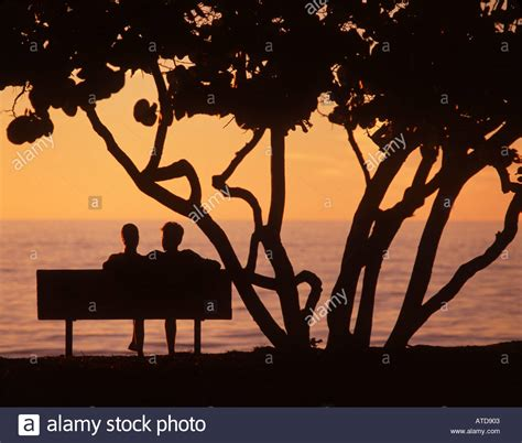 people sitting on a park bench silhouette of two people sitting on a park bench beneath a tree stock photo picture