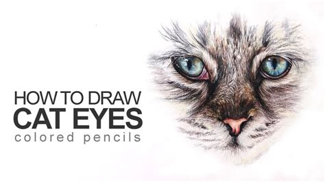 how to draw with colored pencils how to draw cat with colored pencils