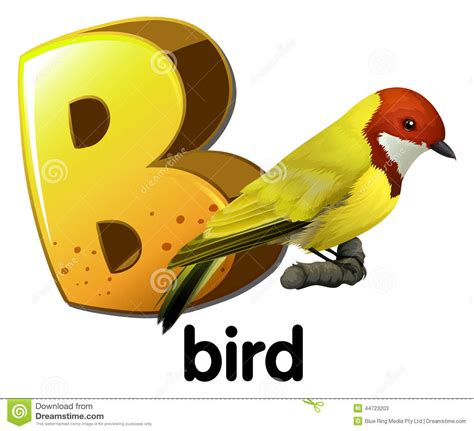 a b a letter b for bird stock vector image 44723203