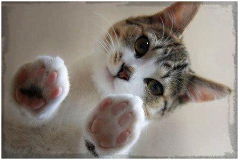 imagenes sarcasticas de gatos gatitos tiernos imagenes de gatitos tiernos con frases y mas