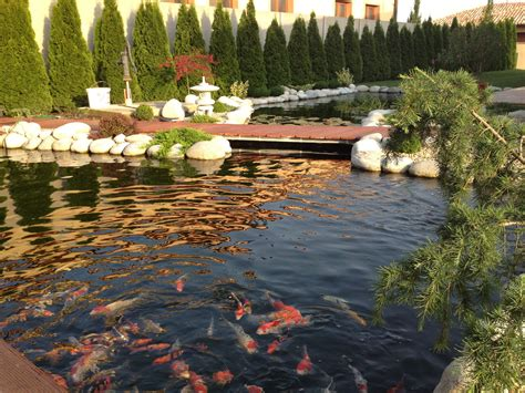 koi ponds water treatement eco scientific