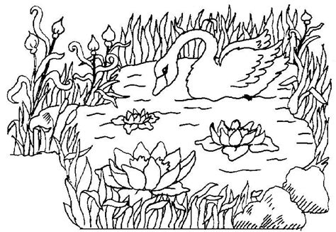 el ecosistema colouring pages coloriage dans la mare cygnes 224 colorier allofamille