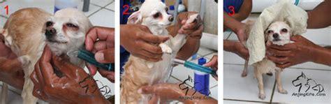 Hair Dryer Untuk Anjing proses memandikan anjing perawatan pemeliharaan anjing
