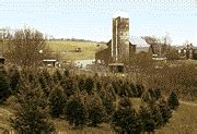 christmas tree farm sussex fall foliage in northwest new jersey skylands sussex county