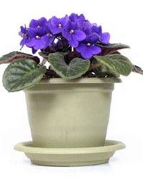 indoor flowering plants that don t need sunlight indoor plants that don t need sunlight