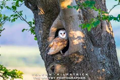 wisdom owl 2018 calendar owl 2018 monthly calendar books sold out 2018 barn owl calendar by glenn kilpatrick