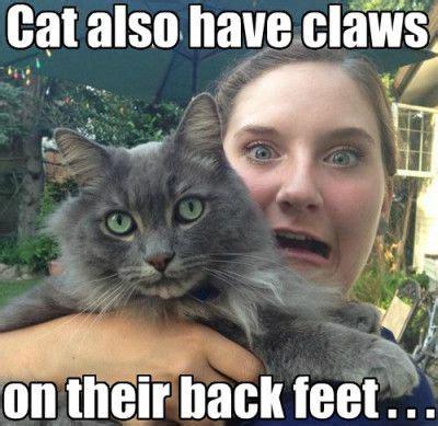 Cat Meme Ladies - 50 cat memes grab bag edition cattime