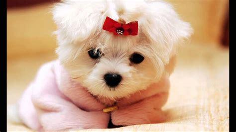imagenes de animales adorables perritos adorables perrosamigos com youtube