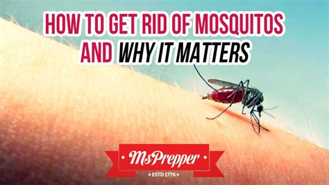 how to get rid of mosquitoes how to get rid of mosquitoes and why it matters msprepper