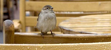 bird feeders sparrow proof bird feeders