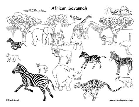 african grassland animals labeled coloring nature