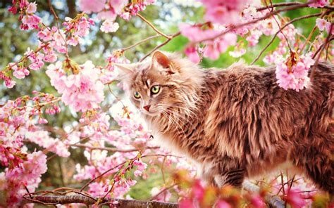 cat cats wallpaper 38414289 fanpop