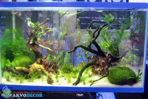 Membuat Aquascape Air Laut | aquascape atau aquarium air laut