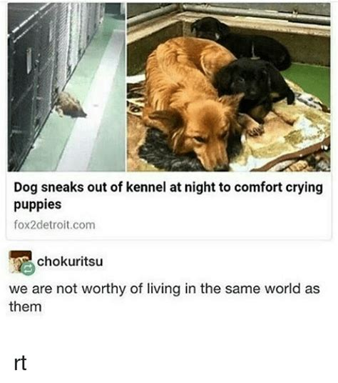 Crying Dog Meme - 25 best memes about we are not worthy we are not worthy