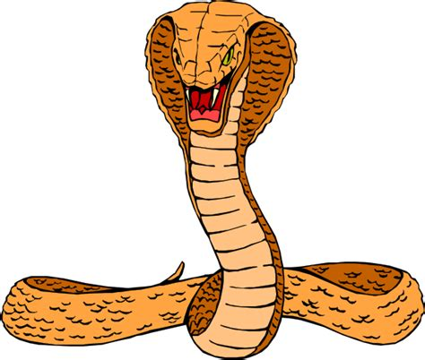 Cobra Snake Clipart orange cobra clip at clker vector clip