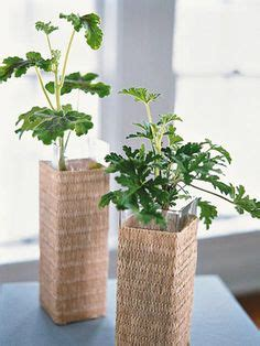 best fragrant indoor plants plant list fragrant plants on plants