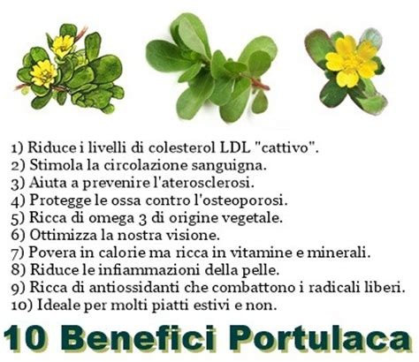 contenuto purine alimenti verdure con basso contenuto di purine alpha nouvelles