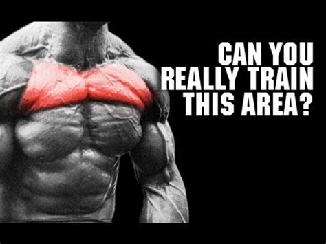 target your chest pec isolation reality