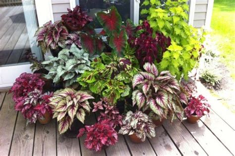 outdoor foliage plants you known these top 10 foliage plants for your garden
