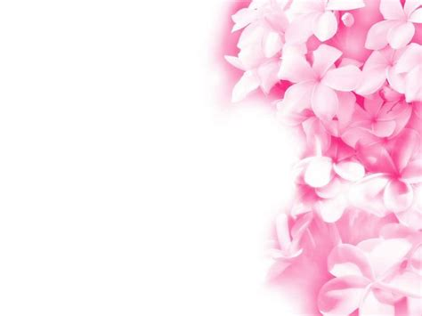 pink k wallpaper pink flowers backgrounds wallpaper cave
