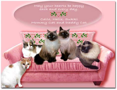 happy valentines day cat jacqueline s cat house happy s day