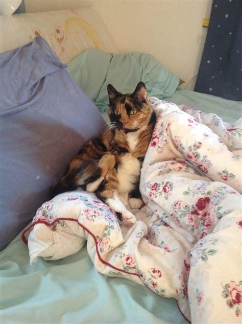 Apartment Living Pets Apartment Dogs Pets Best Pets For Apartment
