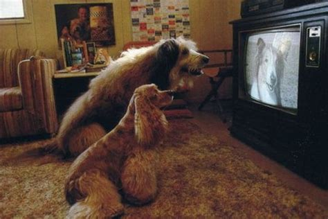 do dogs tv dogs do tv 183 guardian liberty voice