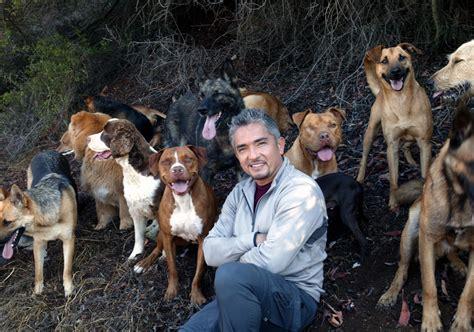 cesar rottweiler rottweiler a probl 233 m 225 s kutyusok megmentője cesar millan