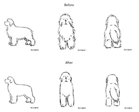 how to groom a priceless tips on how to groom and trim your newfoundland bark time