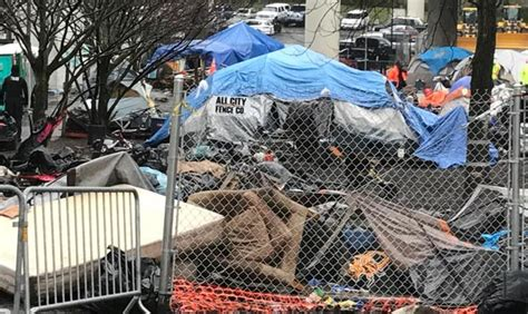 seattle jungle map problem with growing tacoma homeless c goes beyond trash