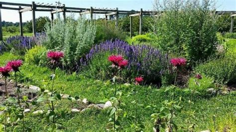 cherry point farm michigan s lavender labyrinth is a one of a kind gem