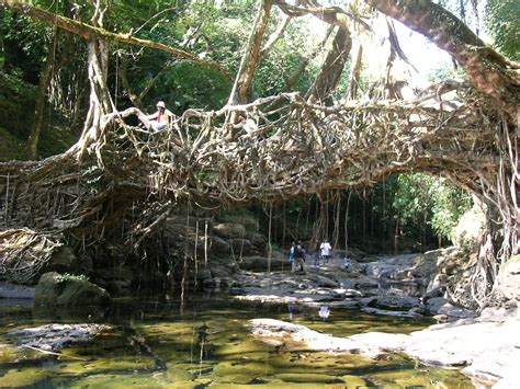 what is root bridge welcome to traveltoolset living root bridges of meghalaya