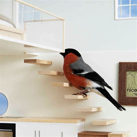 bird in the house good luck bird in the house luck 28 images feathering the nest lucky garden birds are in for