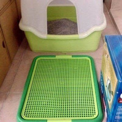indoor dog bathroom solutions 1000 ideas about indoor dog rooms on pinterest whelping