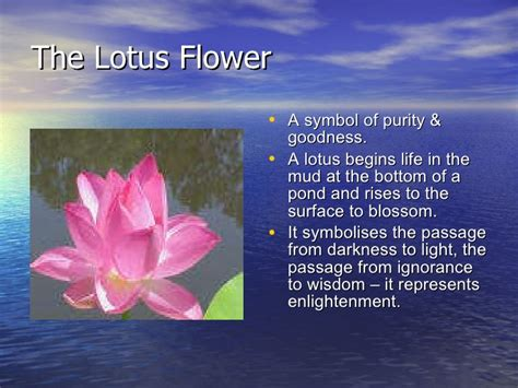 buddhism lotus flower meaning symbols in buddhism