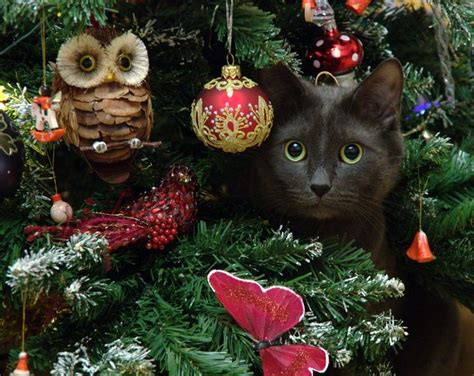 mostlycatsmostly via dmitry ganich meowy christmas