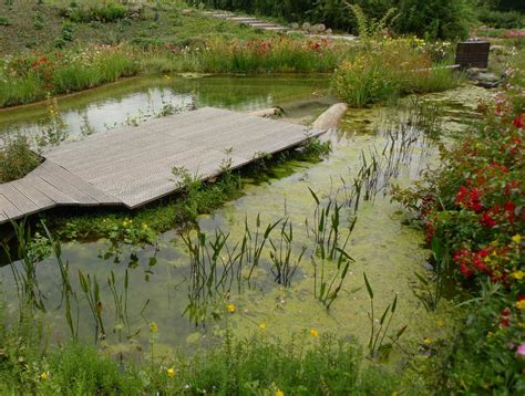 Klares Wasser Im Teich 1420 by Filtergraben Klares Wasser Im Gartenteich Produkte