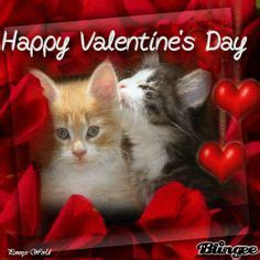 happy valentines day cat 1000 images about meow meow on kittens cats